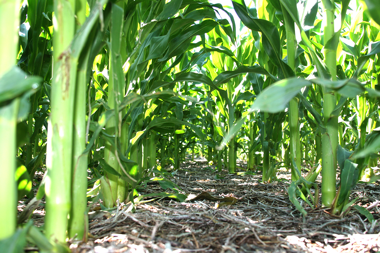 Los 10 principios de la agricultura ecol gica agro for Rotacion cultivos agricultura ecologica