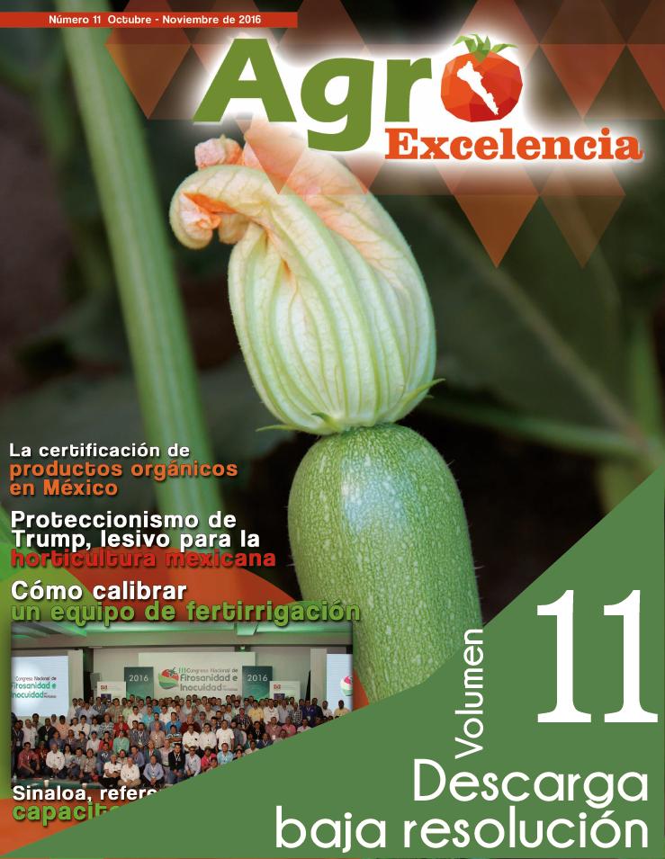 Descarga Revista 11